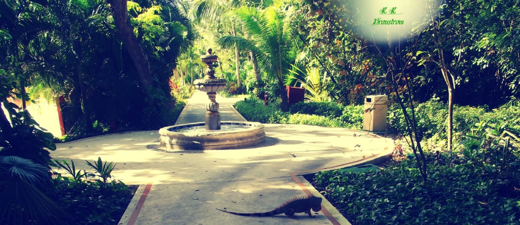 fountain iguana